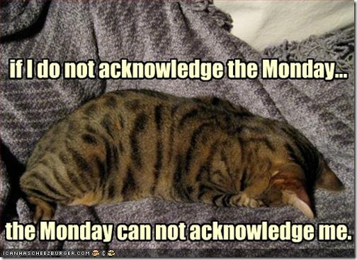 funny-pictures-cat-does-not-acknowledge-monday[1]