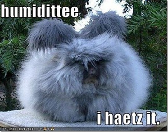 funny-pictures-i-hate-humidity